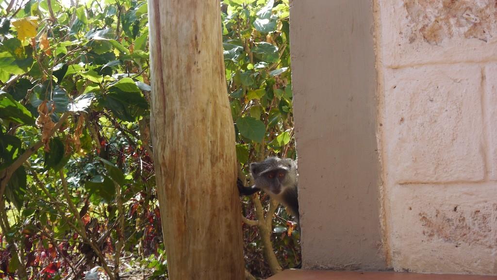 monkey44